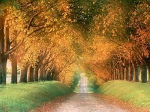 Planes sociales para el otoño