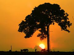 Castanheira - Sunrise